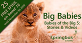 "Springbok Casino's ""Babies of the Big 5"" Videos feature Big Babies of African Wildlife"