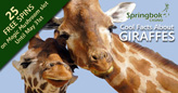 South African Casino Shares Cool Facts about Giraffes